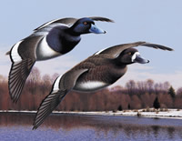 Geese hunting in Romania