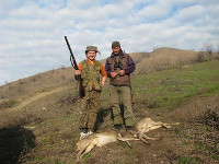 Roe deer hunting in Romania