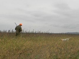 Hunting Pheasant in Romania