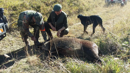 Hunting Wild Boar in Romania